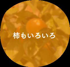 柿もいろいろ