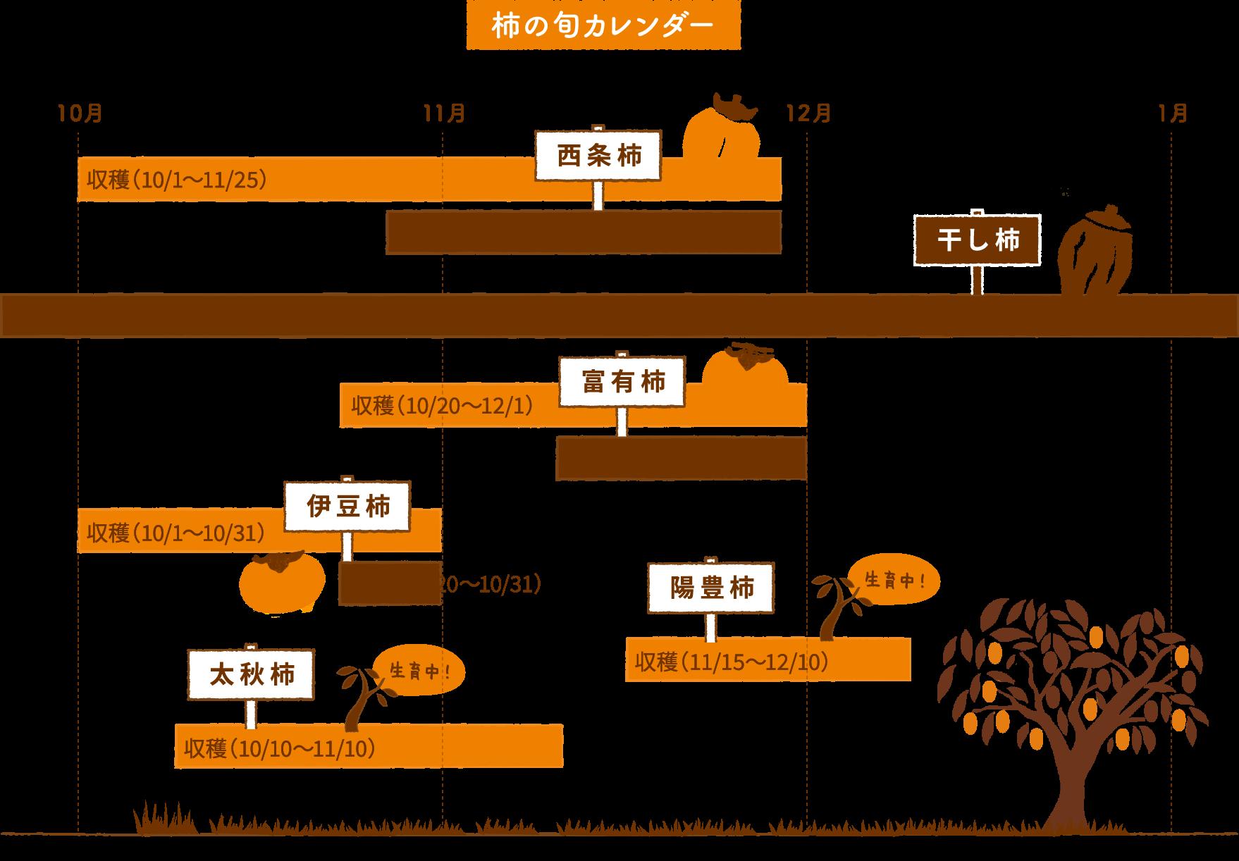柿の旬のカレンダー