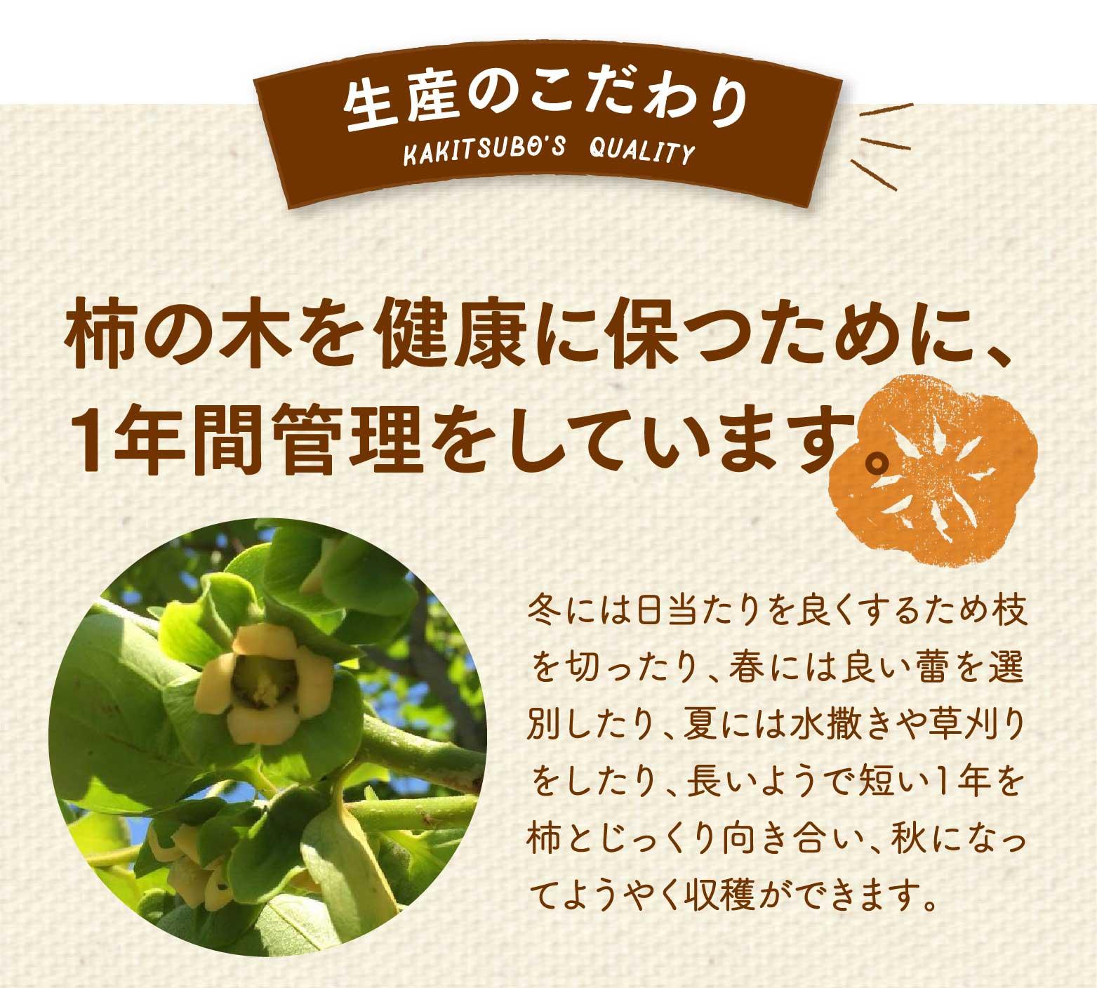 生産のこだわり。柿の木を健康保つために、1年間管理をしています。冬には日当たりを良くするため枝を切ったり、春には良い蕾を選別したり、夏には水撒きや草刈りをしたり、長いようで短い1年を柿とじっくり向き合い、秋になってようやく収穫ができます。