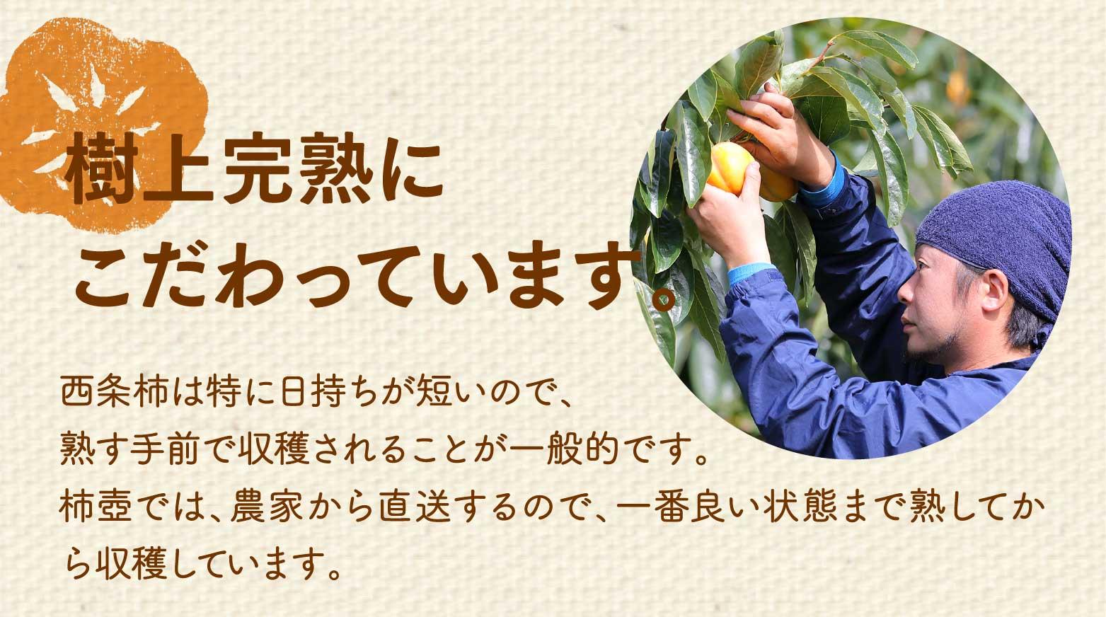 樹上完熟にこだわっています。西条柿は特に日持ちが短いので、熟す手前で収穫されることが一般的です。柿壺では、農家から直送するので、一番良い状態まで熟してから収穫しています。
