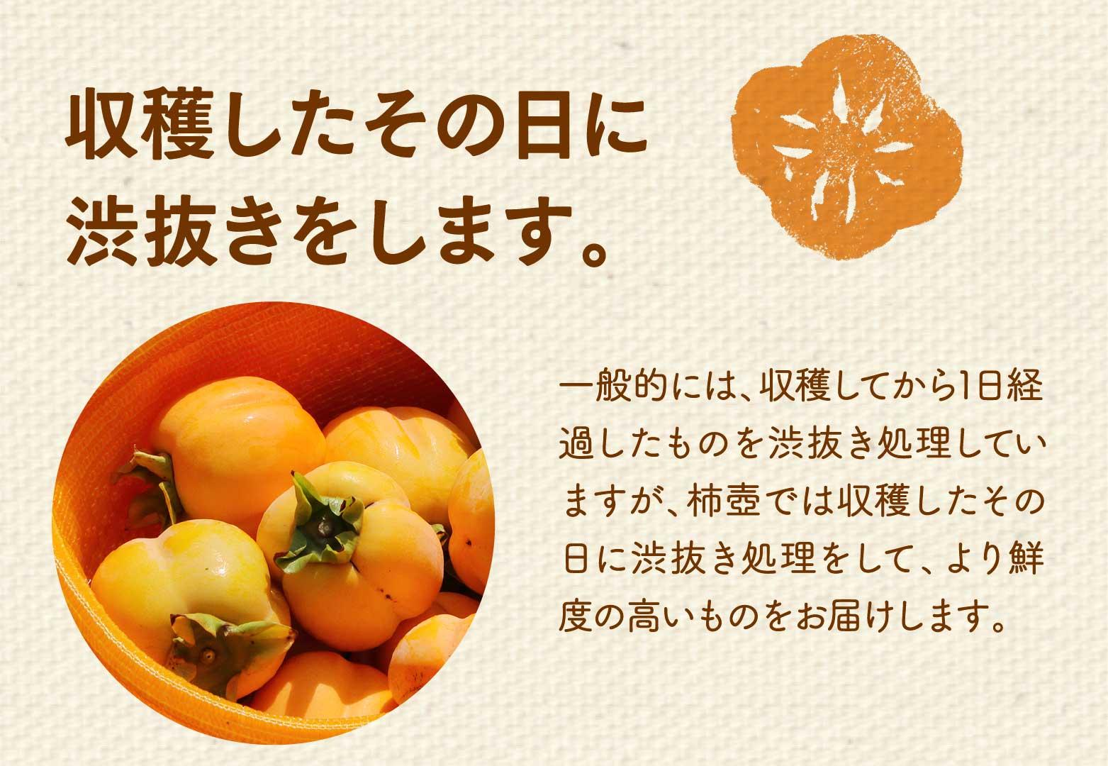 収穫したその日に渋抜きをします。一般的には、収穫してから1日経過したものを渋抜き処理していますが、柿壺では収穫したその日に渋抜き処理をして、より鮮度の高いものをお届けします。