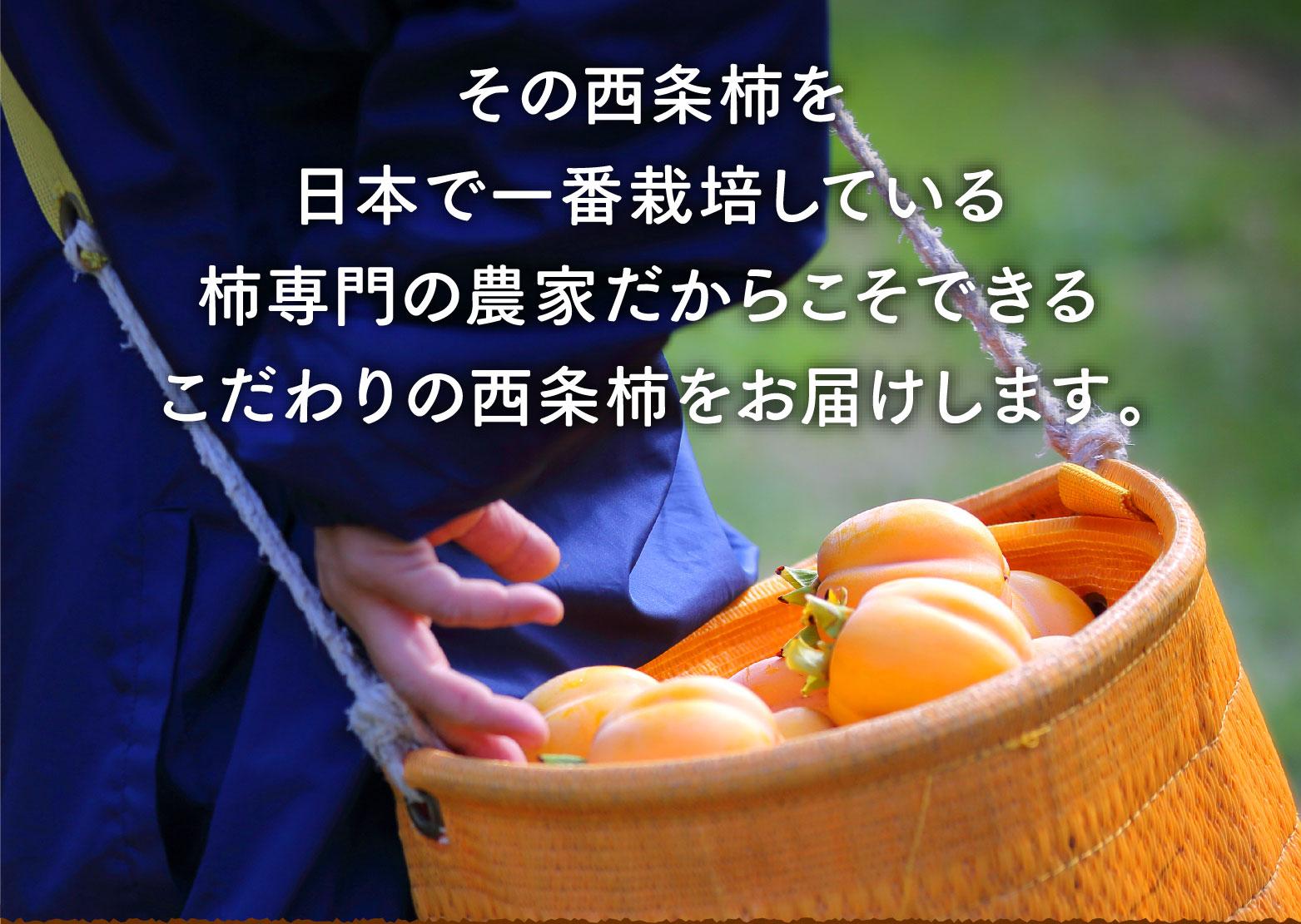 その西条柿を日本で一番栽培している柿専門の農家だからこそできるこだわりの西条柿をお届けします。
